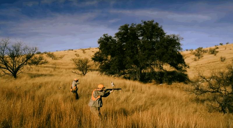 a walk in quail country